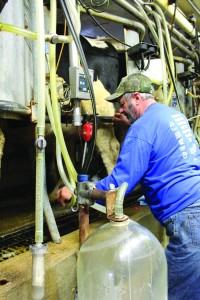 gary standing milking